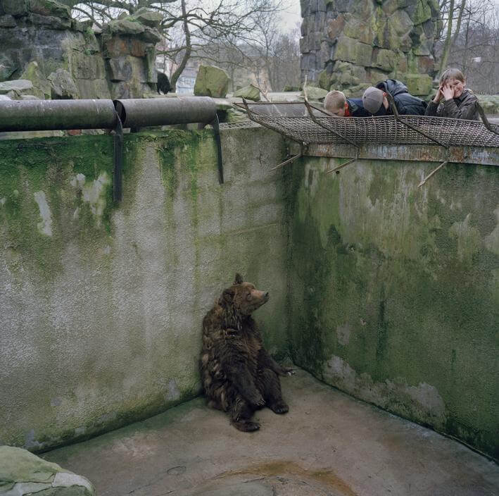 A bear in a dirty, concrete cage in a zoo. Visitors peer down at the depressed-looking bear through the bars of the cage.
